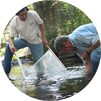 Stream Biomonitoring