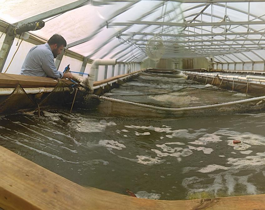 aquaponics fish house