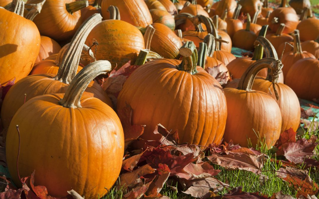 The great pumpkin heist
