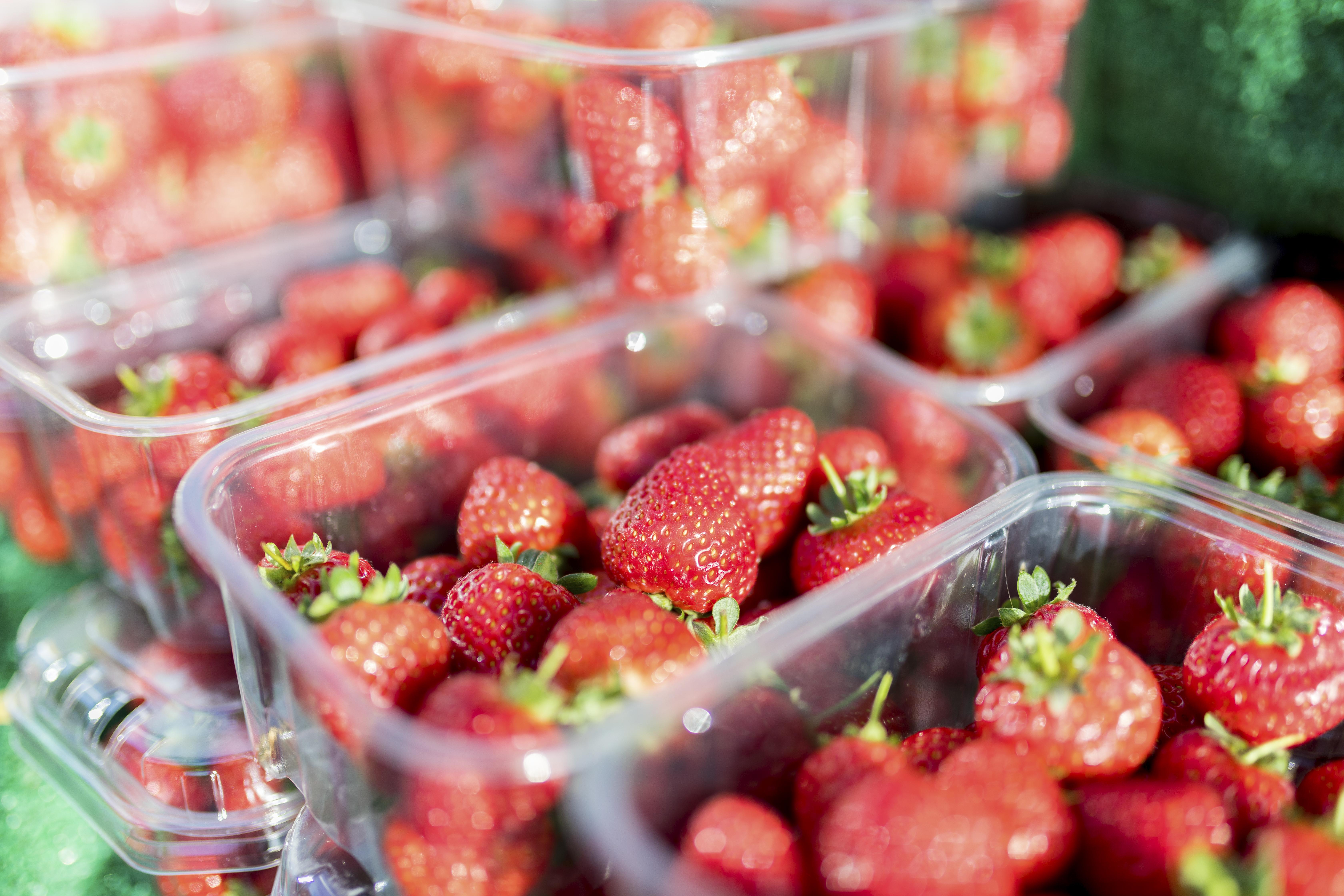 Fresh, ripe summer strawberries in plastic cartons.