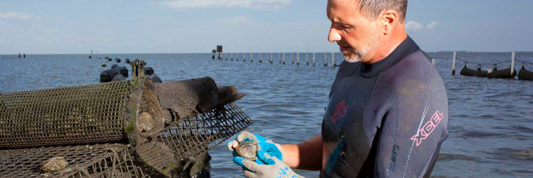 professor checking gulf coast Alabama oyster cage