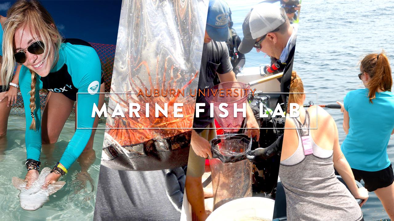 Auburn University Marine Fish Lab advert