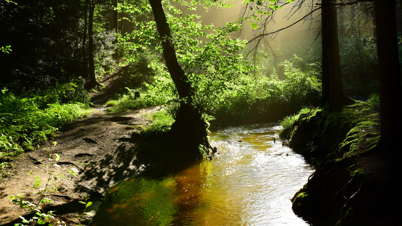 Forest with creek and sunlight