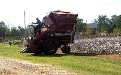 Performance of Cotton Varieties in Alabama, 2018