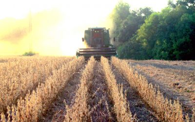 Auburn University Crops / Soybean Research Report 2017