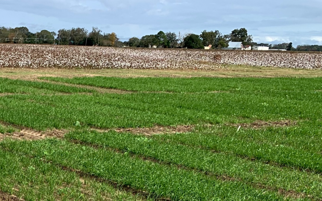 Ryegrass Variety Trial 2020-2021 Planting Dates