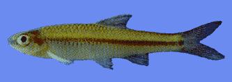 cahaba fish