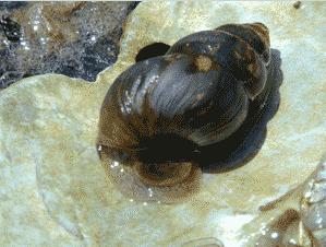 cahaba species 2