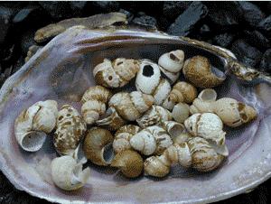 cahaba species
