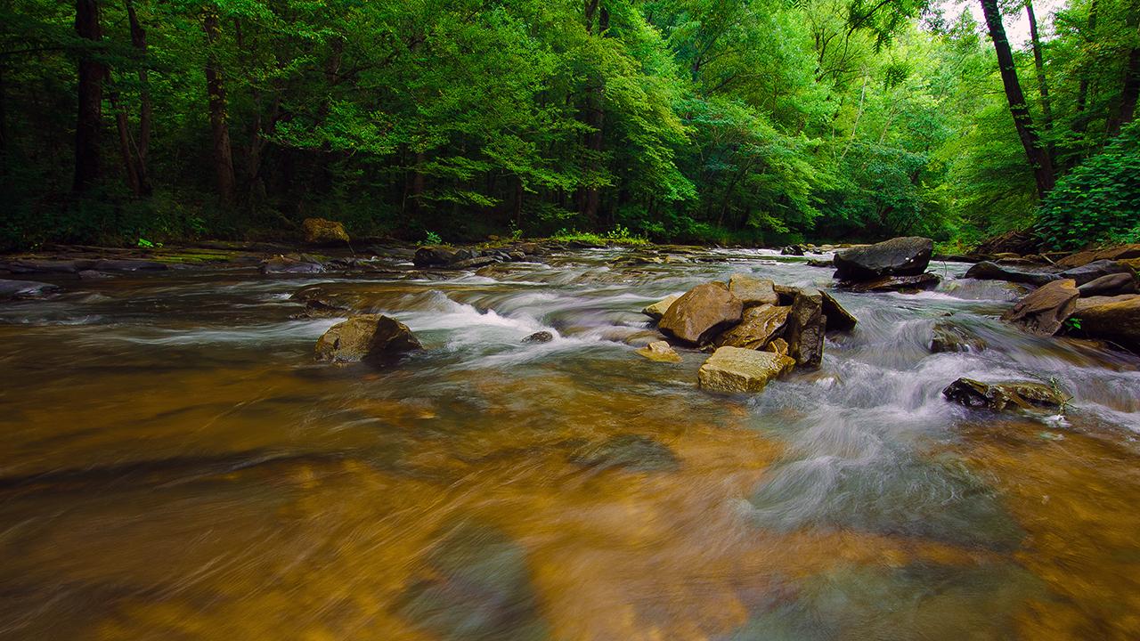Creek in June